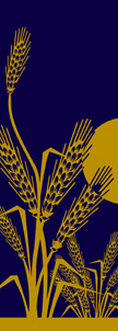 Wheat Design Banner