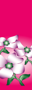 Dogwood Flowers on Pink Background Banner