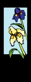 Iris Flower Junior Banner
